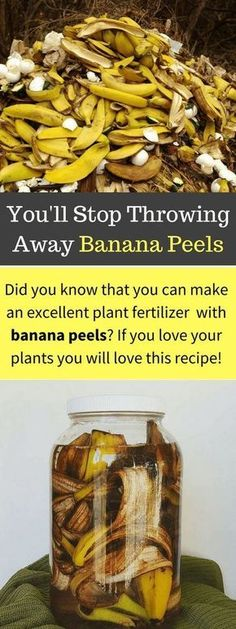 Using Banana Peels in the Garden for Fertilizer and Pests is part of Balcony garden Tips Bananas are mineral rich and recycling the peels back into your garden saves money and returns these nutrient - Garden Compost, Veg Garden, Vegetable Gardening, Veggie Gardens, Balcony Gardening, Garden Plants, Garden Landscaping, Urban Gardening, Landscaping Ideas