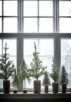 Christmas trees on window ledge.