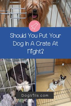 "Are you wondering ""does my dog need a bed in his crate?    ""You might if you've just started crate training your dog and don't know what to put in your puppy's crate.    Fortunately, I've got all the answers you need on how to make your dog's crate more comfortable. Best Puppies, Best Dogs, Dogs And Puppies, Crate Training, Training Your Dog, Cute Dog Collars, Emergency Vet, Dog Stories, Dog Activities"
