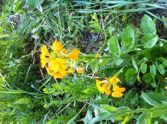 20 mai j'ai vu un rayon de soleil sur les fleurs du jardin !