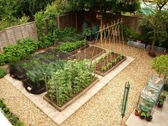 Mark's Veg Plot: My plot