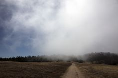 Morning Fog Hike - Morning hike on the Fiscalini Ranch Preserve
