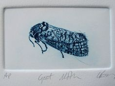 Drypoint Small Goat Moth Hand pulled print by LynnBaileyPrintmaker, £30.00
