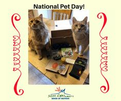 It's National Pet Day! Check out these adorable kitties! National Pet Day, Barefoot, Cute Cats, Footwear, Kitty, Fan, Pets, Creative, Check