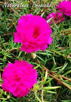 Plantas que mantendrán tu jardín florecido durante todo el año