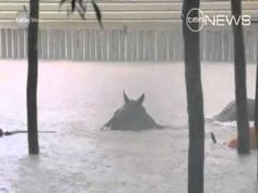 Men battle to save #horses in #floods - YouTube