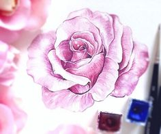 Just practice 💞🎨🥀Have a nice friday evening☺️ #ilustrace  #illustration  #windsorandnewton  #joy  #art  #miluju  #painting  #passion #rose  #watercolorart  #instadaily  #lovepainting  #watercolour  #picoftheday  #czech  #vyrobenosrdcem  #instaart  #instapaint  #colors #pink #praha #prague #friday  #flowerlove  #artlover  #aquarelle  #malovani  #ruze  #loveflowers  #flowerart