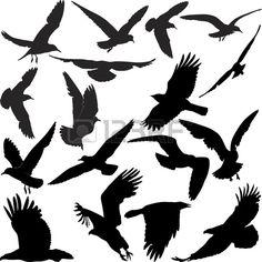 silhouette of a raven hawk eagle gulls crow