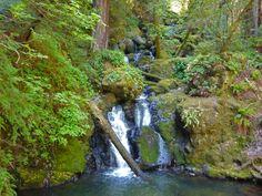 ProTrails.com: Cataract Falls and Alpine Lake, Mt Tamalpais State Park - Rock Spring Trailhead, San Francisco: Marin Headlands - Mt Tamalpais - Point Reyes