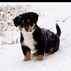 My little Penny bear in her first snow