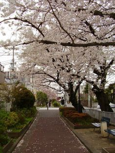 Walk by Jaguzure River on the way to Naoki's house:) Sakura Bloom, Sakura Cherry Blossom, Picture Places, Places In Europe, City Landscape, The Good Place, Tokyo, Scenery, Japanese