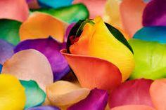 Resultado de imagem para imagem de arco iris