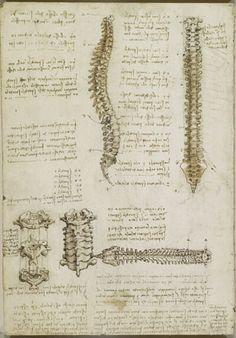 Drawing Human Anatomy Da Vinci in The Royal Collection. Through sheer use of lines Da Vinci masterfully studied and recorded human anatomy. Anatomy Art, Anatomy Drawing, Human Anatomy, Leg Anatomy, Michelangelo, Leonardo Da Vinci Dibujos, Medical Art, Medical Drawings, Medical Technology