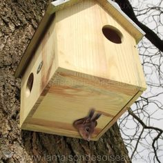 A la Maison des oiseaux, il n'y a pas que des oiseaux…