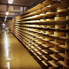Alles Käse in der Reifekammer der Naturkäserei Tegernseer Land. Hier lagern  bis zu zwanzig verschiedene Käsesorten die täglich gewendet werden. #tegernsee #käse #cheese #food #instafood #naturkäsereitegernsee #naturkäserei #fischwildbrennt