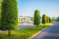 Glasspinnar på Norravägen Kalmar, via Flickr