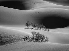 Imagem de árvores no fundo de uma duna de areia