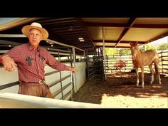 Buck - Official Trailer [HD]  This film is incredible. My favorite documentary by far. So much to learn from it. Buck Brannaman is an incredible man.