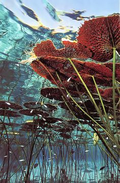 Underwater Get more photo about subject related with by looking at photos gallery at the bottom of this page. Underwater Plants, Underwater Photos, Underwater World, Underwater Photography, Nature Photography, Film Photography, Street Photography, Landscape Photography, Fashion Photography