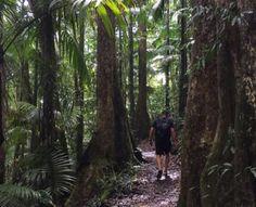 Eungella National Park. Airlie Beach to Brisbane road trip highlights. Queensland, Australia. Photo: theTravelAlbum via IG