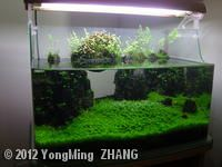 ... about Fish Lands on Pinterest Aquascaping, Aga and Nano aquarium