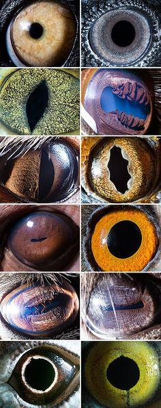 Animal_Eyes_2