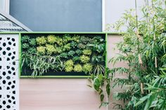 I've been creating vertical gardens for small courtyard and garden spaces for some time now and I've learned that some plants do much better than others in this difficult on-the-wall environment. Vertical Garden Wall, Small Courtyards, Garden Spaces, Landscape Design, Environment, Melbourne, Green, Plants, Landscaping