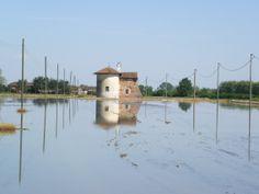 Rice Fields - Vercelli, Italy