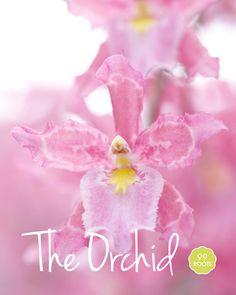 Did you know that the name orchid comes from a Greek word meaning testicle, referring to the shape of the root – delightful!   http://99roots.com/blog/flower_of_the_week_the_orchid
