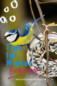 Tips for Winter Bird Care Cold Climate Gardening, Bird Baths, Budgies, Winter Garden, Bird Feeders, Backyard, Birds, Parakeets, Patio