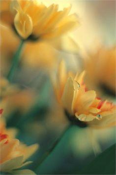 Macro Photography By N Jan (63 photos) - Xaxor