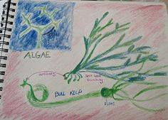 This book is perfect for the fourth grade Man and Animal block, and it is also helpful for learning how to draw plants. An illustration of Algae from my own Main Lesson Book (copied from Book of Nature): Preschool Science, Science Activities, Science Experiments, Simple Poems, Montessori, Plant Illustration, Nature Study, Fifth Grade, Science Lessons