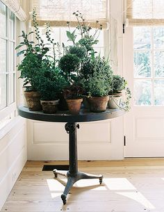 homes - stylists feature: potted plants on table in room