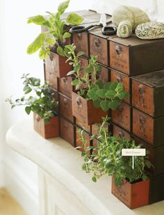 Plants in containers for nuts & bolts.