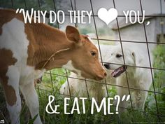 Why eat animals?