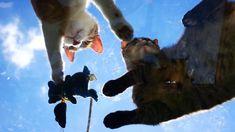Skycats Cat Heaven, Cat Work, 4k Uhd, Mixed Breed, How To Fall Asleep, Good Music, Kittens, Pets, Cute Kittens