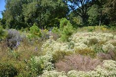 Look at these gorgeous textures in BBG's Native Flora Garden extension.