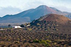 Imagen de Angel Landesa en La Geria, Lanzarote.