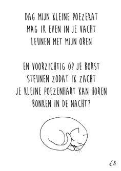 Poezekat - Lot Bouwes  / / Lot Bo