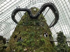 Cloud Forest - Gardens by the Bay - Singapore