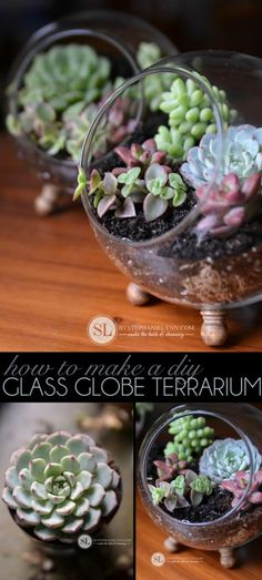 Glass Globe Terrarium with Succulent Plant. Make a beautiful glass globe terrarium with succulent plants and add timeless and classic look to any room in your home or used as a housewarming gifts for your friends and coworkers. Cacti And Succulents, Planting Succulents, Planting Flowers, Mason Jar Succulents, Suculentas Diy, Cactus Y Suculentas, Jardin Luxuriant, Succulent Centerpieces, Succulent Terrarium Diy