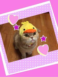 ごあいさつっ!!|ももいろクローバーZ 高城れに オフィシャルブログ 「ビリビリ everyday」 Powered by Ameba