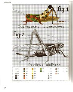 Gallery.ru / Фото #33 - MARABOUT Insects - tatasha