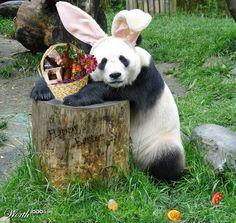 HAPPY EASTER ~ Panda Bunny