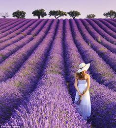 Photographic Print: France, Provence Alps Cote d& Haute Provence, Plateau of Valensole, Lavander Fields by Michele Falzone : Lavander, Lavender Fields, Lavender Flowers, Rose Flowers, Lavender Aesthetic, Purple Aesthetic, Shooting Photo, Purple Reign, Professional Photographer