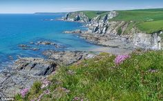 Ayrmer Cove is a beautiful sandy beach found just below the village of Ringmore in South Devon.  The stunning slate cliffs that surround the cove keep it quiet and sheltered. It is the perfect beach for swimming and during low tide there are plenty of rock pools for children to explore.