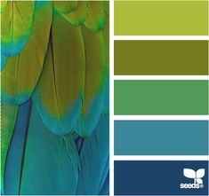 home decorating color palette :feathered brights