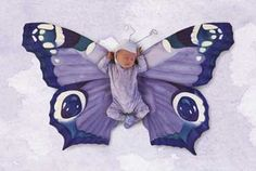 Baby Butterfly Photo:  This Photo was uploaded by hhhhhh_014. Find other Baby Butterfly pictures and photos or upload your own with Photobucket free imag...