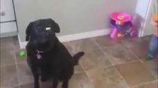 El perrito estaba muy concentrado pero no contaba con este ladroncito jajaja - Pal Feis