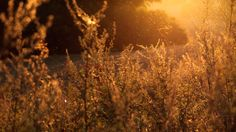 grass, nature, sunset, orange, pollen. No Credit Needed. UnSplash - All photos published on Unsplash are licensed under Creative Commons Zero which means you can can copy, modify, distribute and use the photos, even for commercial purposes, all without asking permission.  The presentation and collection of these images is copyrighted by Crew Labs Inc. (2014).